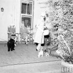 Elena Lupescu isi plimba cainii in Bermuda, 1941
