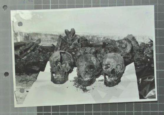 craniu-stefan-foris