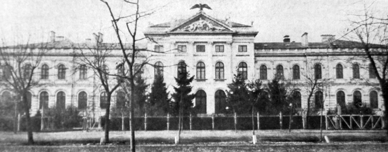 O istorioară cu români și gorile la Muzeul Antipa